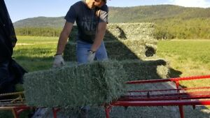 Hay Delivery and Stacking Service