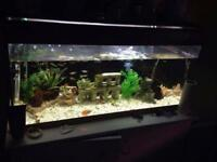 3ft fish tank with stand