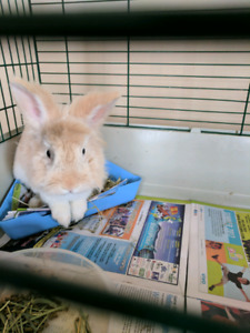 Male bunny with cage