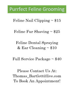 Brittany's Feline Grooming Services!