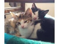 Two lovely kittens offered to genuine loving homes