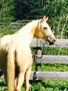 Horse Transport - This Week