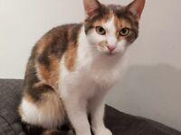 Beautiful Tortoise Shell Cat Needs New Loving Home