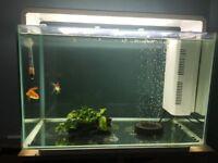 SOLD**60L fish tank
