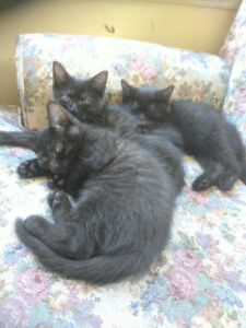 Kittens to good home