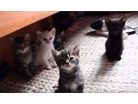 6 Gorgeous Kittens