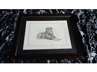 rottweiller pencil drawing