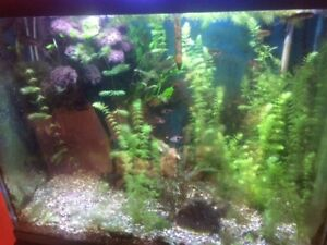 Looking to Sell Two Fully Stocked Aquariums