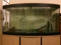 Quick sale- curved fish tank with full setup