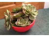 Faux Cacti/Succulents Plants In Orange Pot