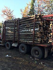 Best Deal hardwood Firewood Dry 8ft logs $155 791-0285