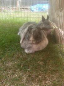 Bunny Needs Rehoming