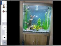 Aquaone 620T fish tank and stand!