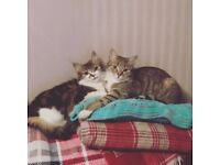 Both cats missing since Monday 17th July