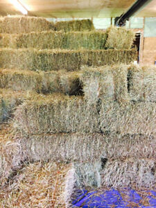 First cut square bales 2017 Erin Area