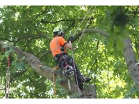 Exciting Opportunity for Arborists/Climbers/Team Leaders to join our expanding established division