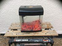 Betta complete tropical aquarium fish tank set up