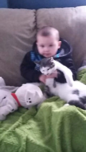 Missing male cat white with gray spots