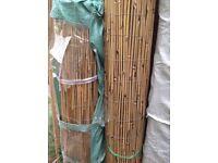 Bamboo cane screening