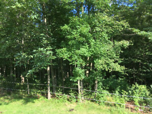 Standing Lumber for Sale