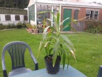 yucca plant, which needs a good home