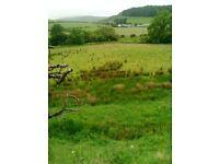 LAND FOR RENT AT PEEBLES AT WINKSTON FARM £7O PHONE 07922202014