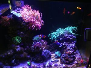 Saltwater fish and coral