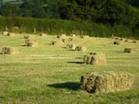 SMALL BALES of HAY - BEST HAY arround Chipping Norton -120 bales-