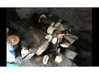 Well seasoned Logs