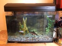 90L Aquarium with everything you'll need to keep tropical fish