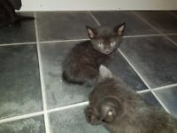 X4 beautiful Kittens for sale
