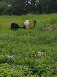 recherche animaux de ferme a donner