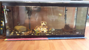 Large fish tank with fish and food