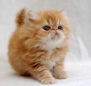 Cat sitter!
