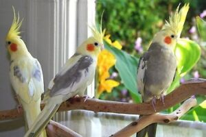 Any Bird Sitters In GP?
