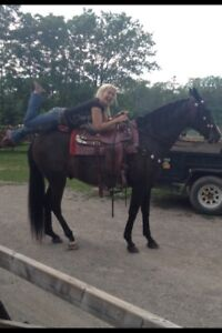 EXPERIENCED HORSE WOMAN AVAILABLE FOR WORK