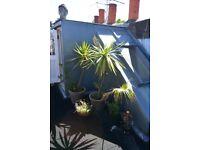 Outdoor plants - URGENT (before 22.08) - West London