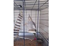 Female cockatiel and large cage etc