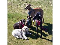 Dog walking and doggy day care in Sutton, Banstead, Epsom, Tadworth and surrounding areas