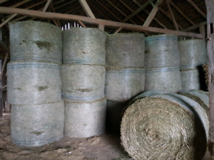 1st cut horse hay for sale