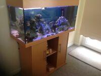 Dual fish tank