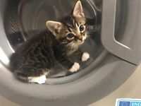 I have 2 kittens for sale - 120 (text only)