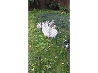 4 cute very friendly rabbit £50 each
