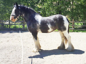 Special Opportunity to Own a One of a Kind Horse