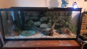 Ball Python & Accessories for Sale