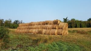 Horse Hay, 4 ft round bales