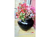 Fibreglass pot n flowers