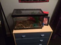 Corn snake and tank for sale with bits of the started set up inclued