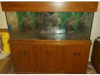 Large fish tank + cabinet