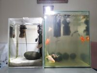 35 liter tank + 15l tank + FISH + ALL equipment, filters heaters cleaning equipment and chemicals